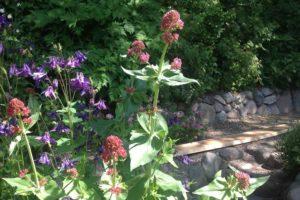Blomster ved stengærdet