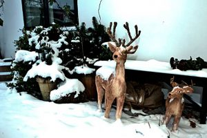 Sne og dådyr foran bed and breakfast hotel Albertine