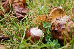 Efterår med kastanjer foran BB Albertineautumn-and-chestnuts